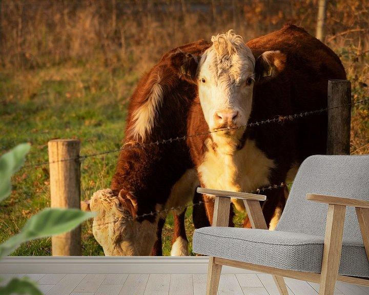 Beispiel fototapete: Kühe von Diana Kors