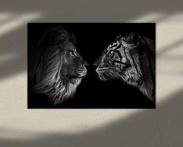 Big cat staredown leeuw en tijger (zwarte achtergrond) van Daphne van Dam
