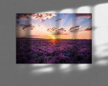 Zonsondergang op de Ginkelse heide In Ede van Nicky Kapel