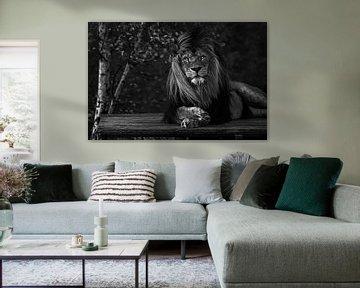 Afrikanischer Löwe im Wind von Daphne van Dam
