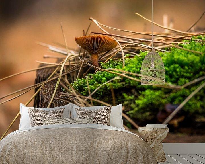Beispiel fototapete: Waldpilz von Martijn Tilroe