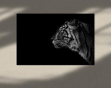 Sumatraanse tijger zwart-wit & en profil van Daphne van Dam