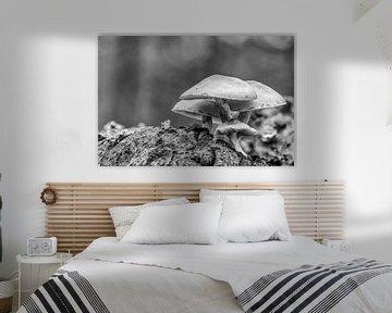 Nahaufnahme von gewöhnlichen Schwefelköpfen in Schwarzweiß von Photo Henk van Dijk