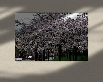 Kopenhagen, bloeiende bomen van Greetje Dijkstra