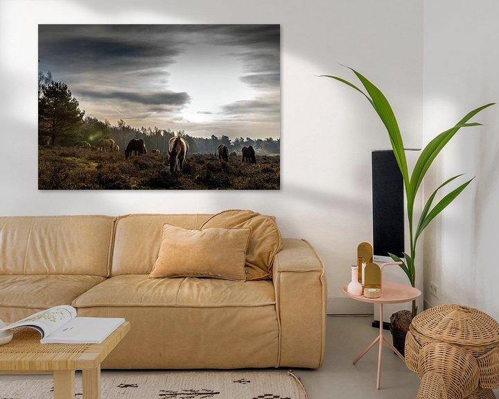 Sfeerimpressie: Paarden op Plantage Willem III van Jacques Jullens