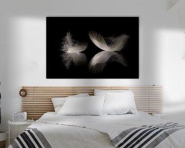 zwei Federn von Karin de Boer Photography