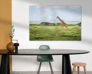 Giraffe in Tansania von OCEANVOLTA