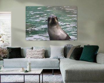 Neu dekorierter junger Seelöwe von Lizette Schuurman