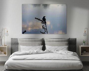 Vogel bei Sonnenaufgang von Lizette Schuurman
