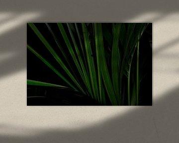 Kentia (Howea) Palm close-up abstract van Jolanda Berbee