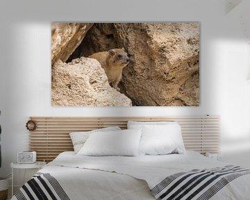 Kliffkrawatte im Ein-Gedi-Naturschutzgebiet, Israel von Jessica Lokker