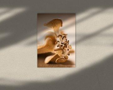 SF 12686494 Focus van oesterzwam van BeeldigBeeld Food & Lifestyle