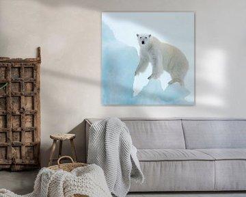 Polar Bear van David Potter
