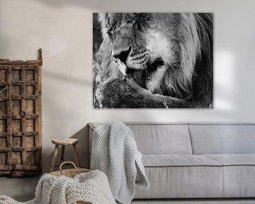 Löwe aus nächster Nähe von Linda van der Steen