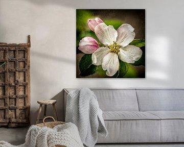 Kirschblüte von Jos Verhoogen