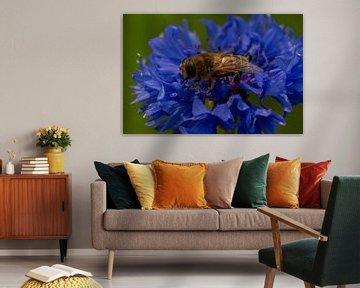 Kornblume und Biene von By Foto Joukje