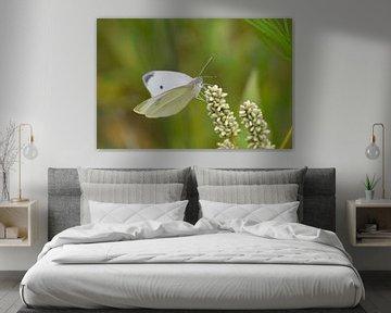 Schmetterling von By Foto Joukje