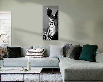 Schwarz-Weiß-Zebra von Linda van der Steen