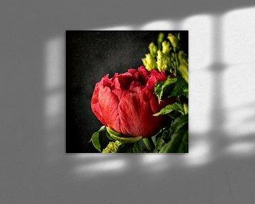 Gladiolen von Jos Verhoogen