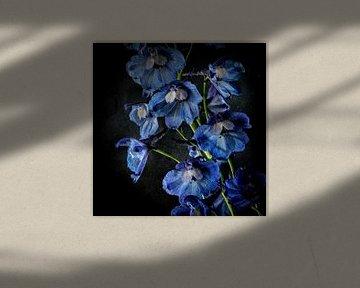 Blaue Glocken von Jos Verhoogen
