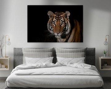 Porträt eines jungen Tigers von Jos van Bommel