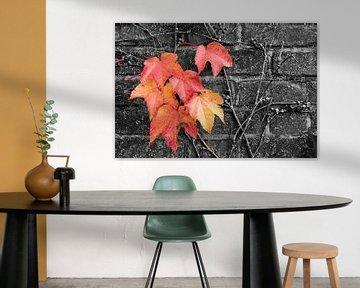 Efeu in Herbstfarben von Denis Feiner