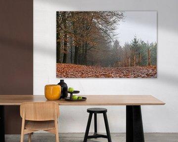 herfstbodem op Kwintelooijen van Tania Perneel
