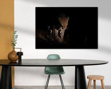 Leopard taucht aus der Dunkelheit auf von Jos van Bommel