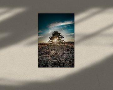 levensboom, licht door de bomen van Evelien van der Horst