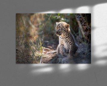 Leopardenjunges wärmt sich in der Sonne von Jos van Bommel