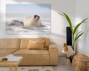See-Elefantenwelpe bittet um Milch von Jos van Bommel