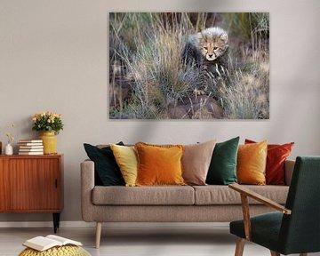 Neugieriges Gepardenjunges von Jos van Bommel