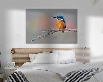 Eisvogel in schönen Pastellfarben