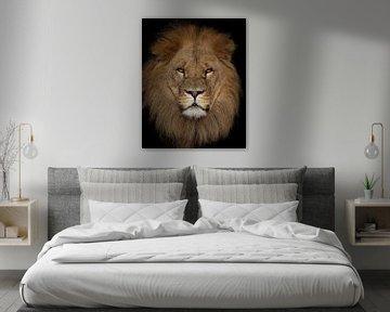 Portret van een impossante Leeuw van Patrick van Bakkum