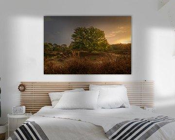 Niederländische Landschaft mit altem Baum auf Drenthe's Paradise bei Sonnenaufgang. von ina kleiman