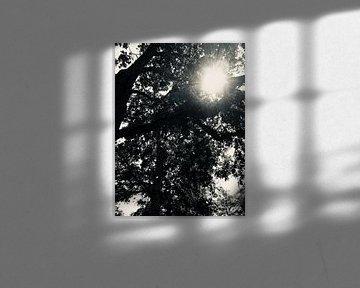 Black & white nature van Eline