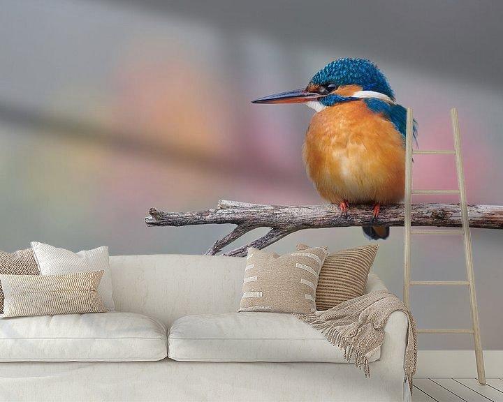 Beispiel fototapete: Eisvogel in schönen Pastellfarben von IJsvogels.nl - Corné van Oosterhout