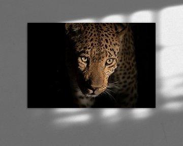 Nahaufnahme Leopard bei Nacht von Jos van Bommel