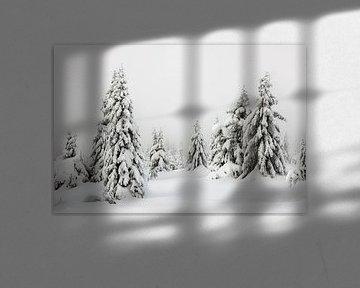 Schneebedeckte Bäume in Norwegen - 2 von Adelheid Smitt