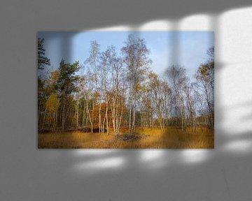 Berkenbomen van Johan Vanbockryck
