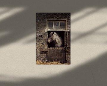 trekpaard op stal...