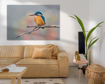 Martin-pêcheur en couleurs pastel