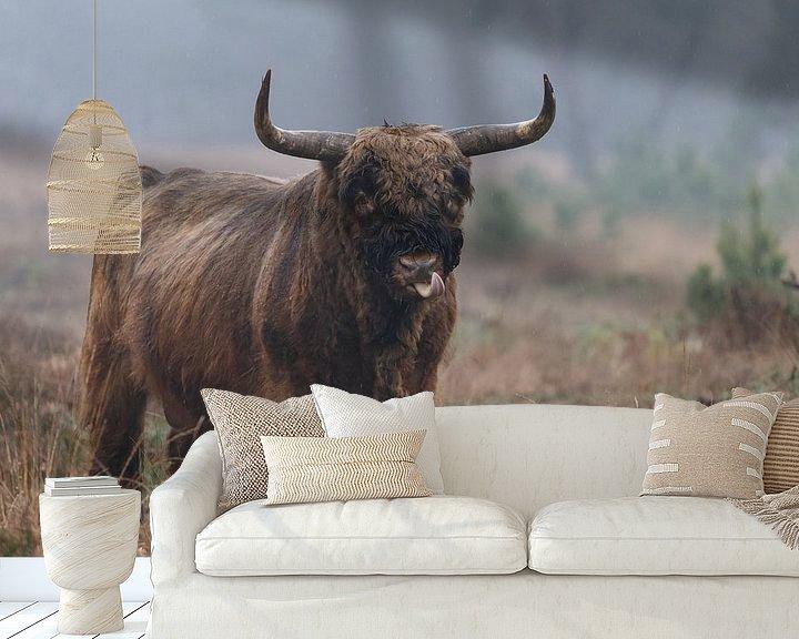 Beispiel fototapete: Schottischer Highlander-Stier von Menno Schaefer