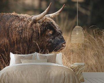 Schotse Hooglander Stier portret. van Menno Schaefer