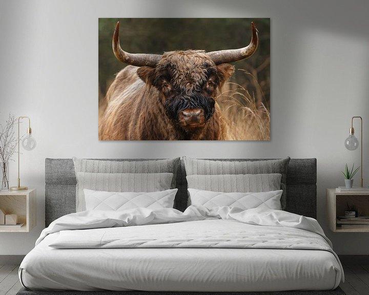 Sfeerimpressie: Schotse Hooglander Stier van Menno Schaefer