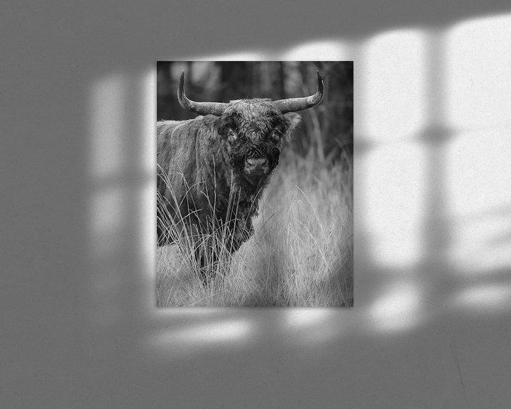 Sfeerimpressie: Schotse Hooglander in Zwart/wit van Menno Schaefer