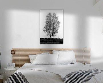 Baum in der Landschaft von Menno Schaefer