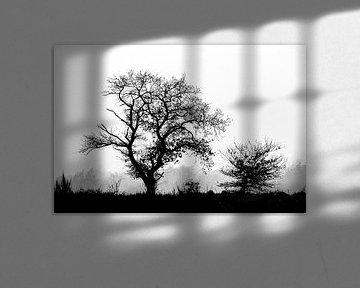 Bäume in der Landschaft, aber in schwarz-weiß von Menno Schaefer