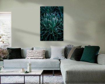 Fettpflanze von Linda Bouritius