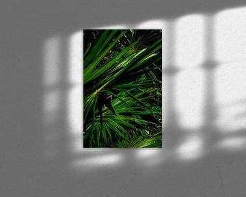 Nahaufnahme Grünes Segeln von Linda Bouritius